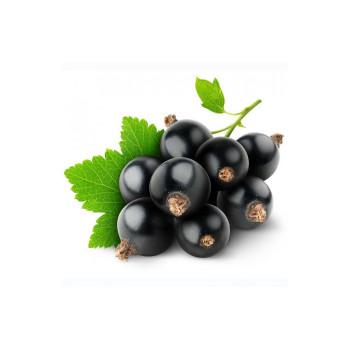 Табак для кальяна Tangiers NOIR Brambleberry (Черная Смородина) 250г